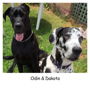 Odin & Daks Black Cropped